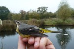 November Birding Update!
